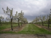 A West Country Orchard